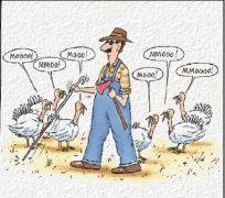 Turkeys saying moo for blind farmer