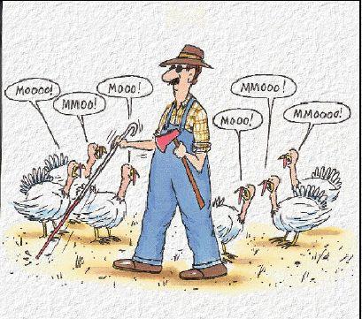 thanksgiving-joke-720535